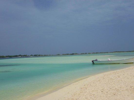 Cayo Crasqui - Los Roques: playa