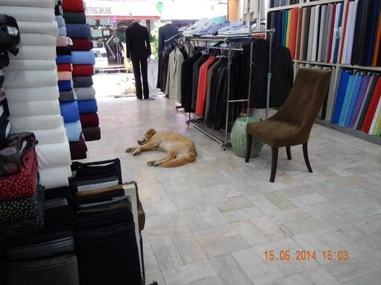 Magnifique Tailor : dogs in the shop