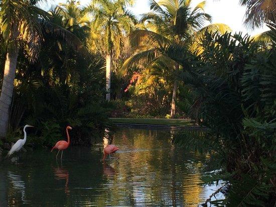 Meliá Caribe Tropical All Inclusive Beach & Golf Resort: территория отеля