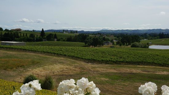 William Hill Estate Winery : The view