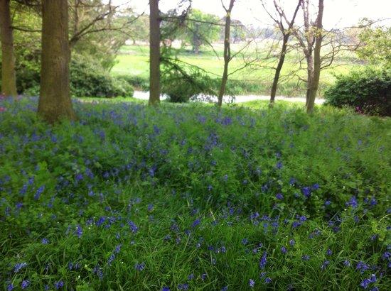 Attingham Park: Beautiful