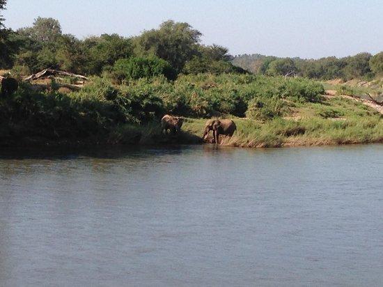 Naledi Game Lodges: Elephants drinking.