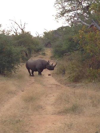 Naledi Bushcamp and Enkoveni Camp: Black rhino.