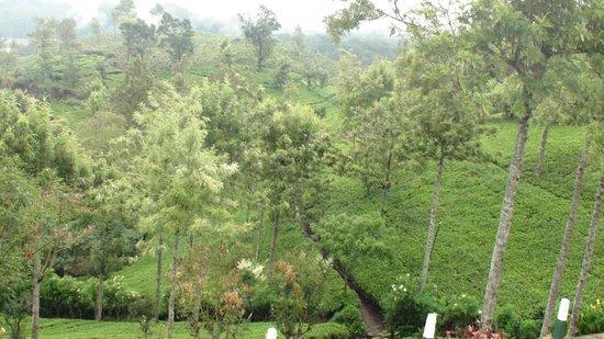 Nuwara Elia et pays du thé : Tea estates belong to Pedro Estate