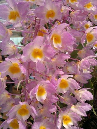 Dalat Flower Park : 2