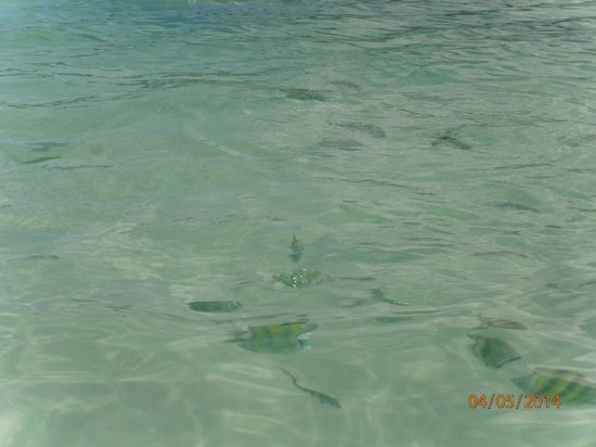 Freedom Beach : Look at the fishes