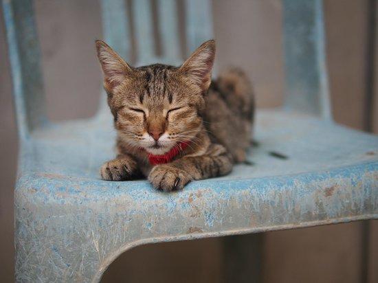 Cats - Picture of Lanta Animal Welfare, Ko Lanta - TripAdvisor