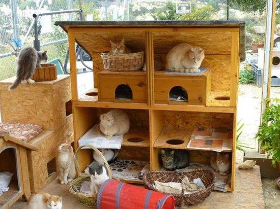 Tala Monastery Cat Park: Pussy Cat Palace