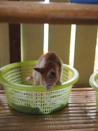 Lanta Animal Welfare : Cats