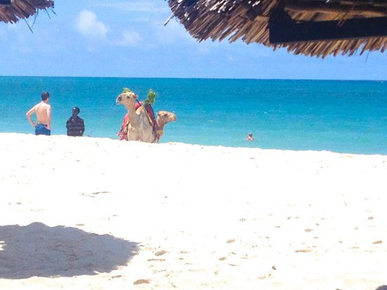 Southern Palms Beach Resort : Diani beach