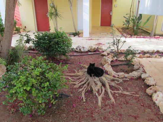 Atlantica Aeneas Hotel: Cats are everywhere