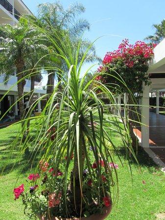 Atlantica Aeneas Hotel: Lovely flowers
