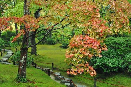 Kyoto 2017: Best of Kyoto, Japan Tourism - TripAdvisor
