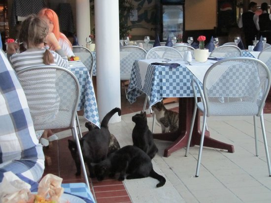 Atlantica Aeneas Hotel: Cats are everywhere and they always ask for food
