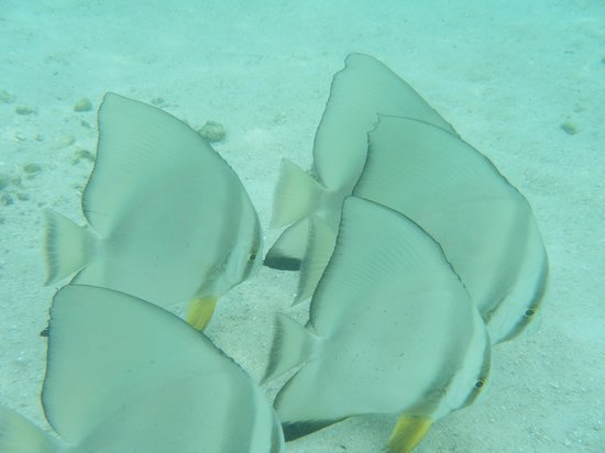 Ellaidhoo Maldives by Cinnamon : snorkeling