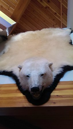Northern Frontier Visitors Center : polar bear