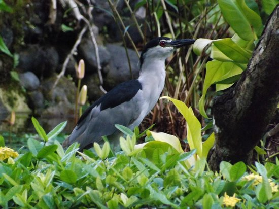 Sol Beach House Bali Benoa by Melia Hotels International: more wildlife...