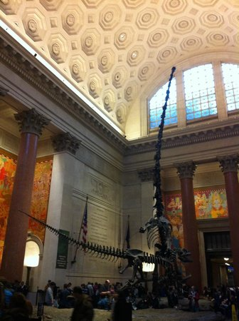 American Museum of Natural History : The Theodore Roosevelt Rotunda (entrance lobby)