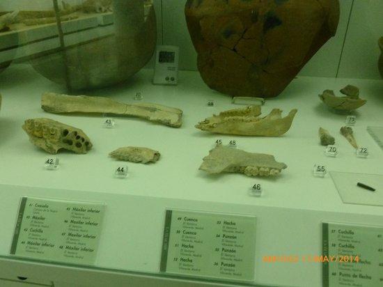 Museo de los Origenes (Museo de San Isidro): Fósiles.