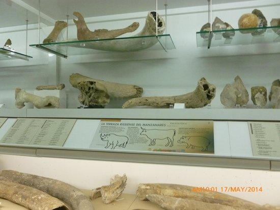 Museo de los Origenes (Museo de San Isidro): Huesos.