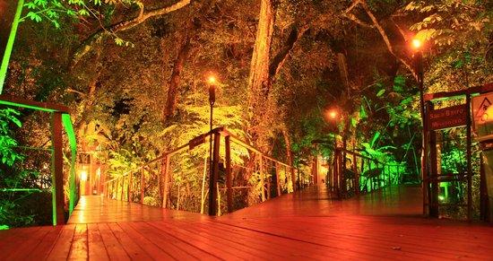 La Cantera Jungle Lodge: magique de nuit!
