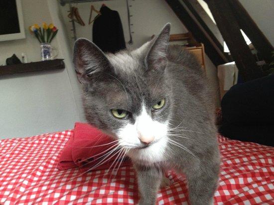 Tulip of Amsterdam B&B: Il loro fantastico gatto