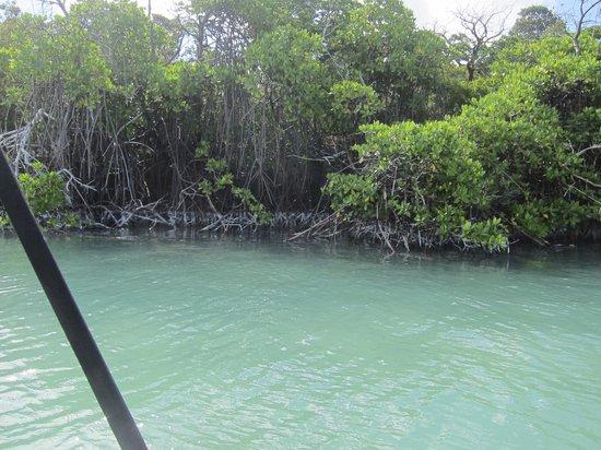 Lagoon Tours Bahamas  - Tours : Mangroves in Pigeon Creek.
