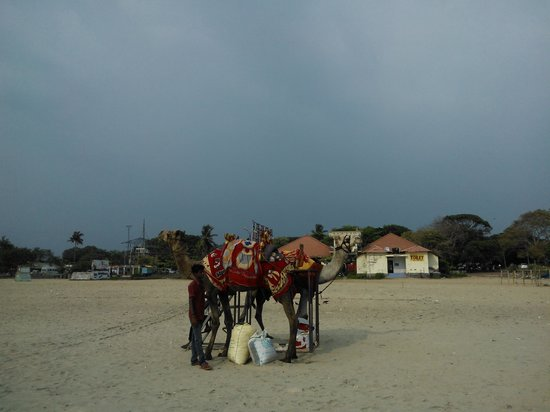 Alappuzha Beach: camel safari