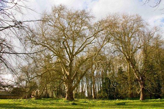 Chateau du Quengo: les arbres centenaires
