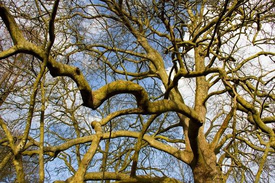 Chateau du Quengo: les arbres du parc