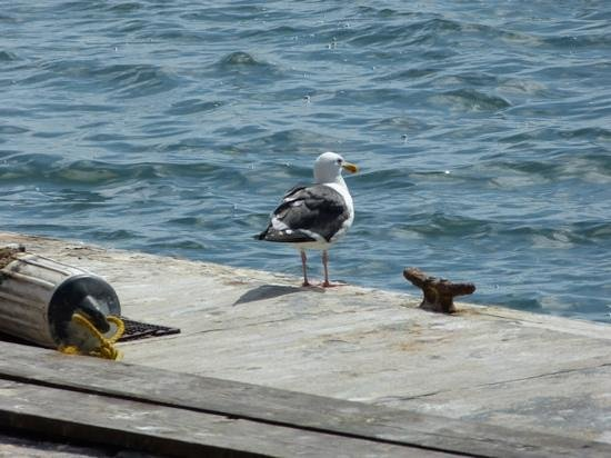 Fisherman's Village: Seagull enjoying the sun