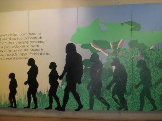 Maropeng Visitor Centre: Mankind over time