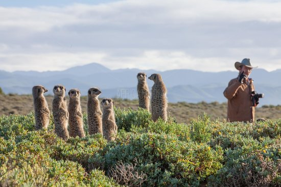 Meerkat Adventures: the gorgeous swartberge behind the den