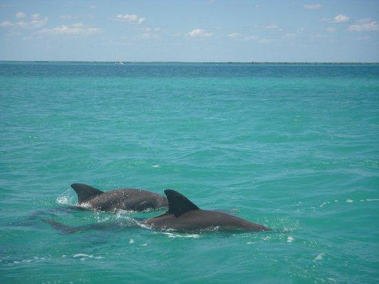 Sian Ka'an Biosphere Reserve: Avistamiento delfines
