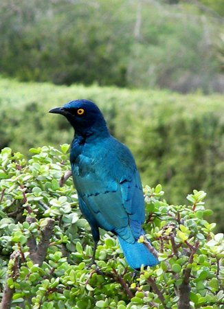 Wilderness National Park: Bird lovers Paradise.