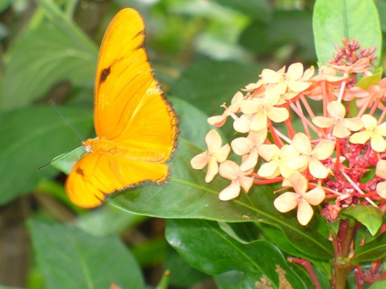 Lewis Ginter Botanical Garden: Able to get close enough to take butterfly photos