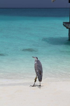 Velassaru Maldives: New Friend