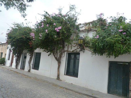 A la Pipetuá!: Calles vecinas floridas