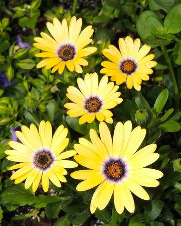 Daniel Stowe Botanical Garden : Beautiful