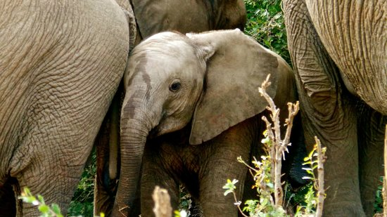 Thakadu River Camp: Baby ellie...