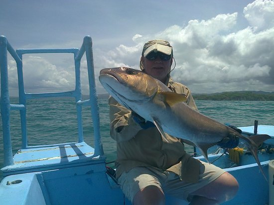 Buena Vista Sportfishing : seriole