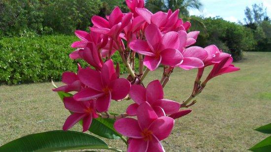 Treasure Cay Beach, Marina & Golf Resort: more beautiful flowers