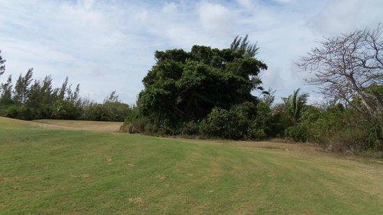 Treasure Cay Beach, Marina & Golf Resort: tree bush
