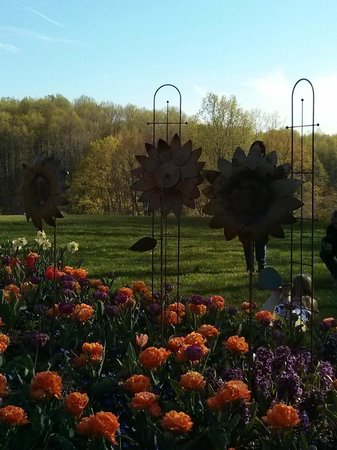 Meadowlark Botanical Garden : Always plenty of flowers in the gardens
