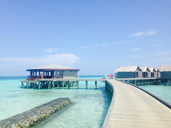 Centara Ras Fushi Resort & Spa : Viu bar