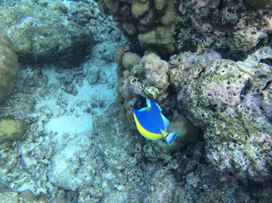 Centara Ras Fushi Resort & Spa : Fish around villa