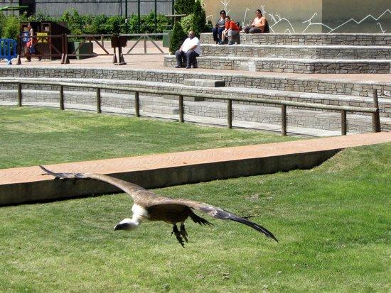 Zoo Aquarium de Madrid : Big birds show