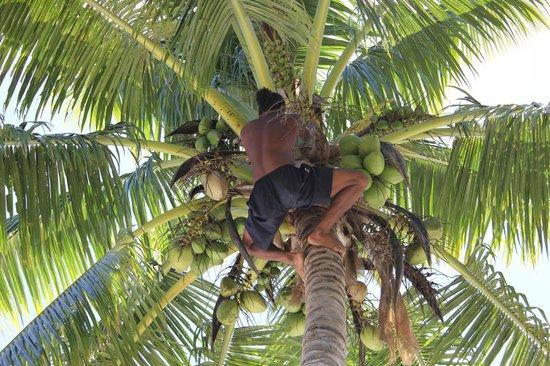 Robinson Crusoe Island : Вот так рвут кокосы