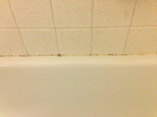 Grand Forks Inn & Suites: Mold