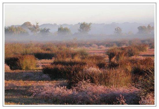 Les Marais du Vigueirat: La sansouïre en fin d'hiver